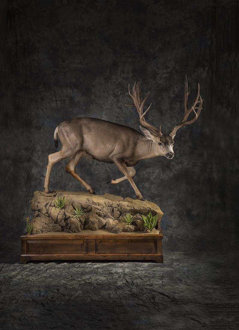 Daves Taxidermy Deer Mount
